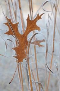 Frost Dunes-Sav-010