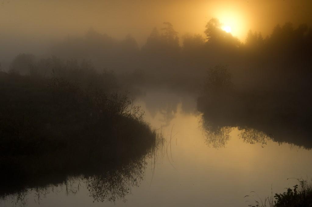 PteAuxChenesRv2 dawn -028