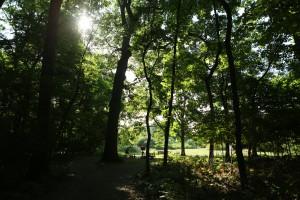 arboretum-july-2016-by-dan
