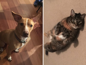 Cooper the dog and Nutmeg the cat are part of Dominiak's support system.